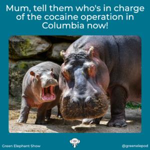 Columbian Hippo menace