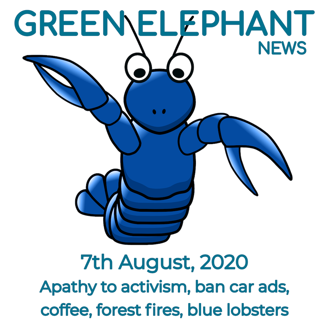 Green Elephant News 6th August 2020