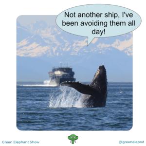 Whale strike